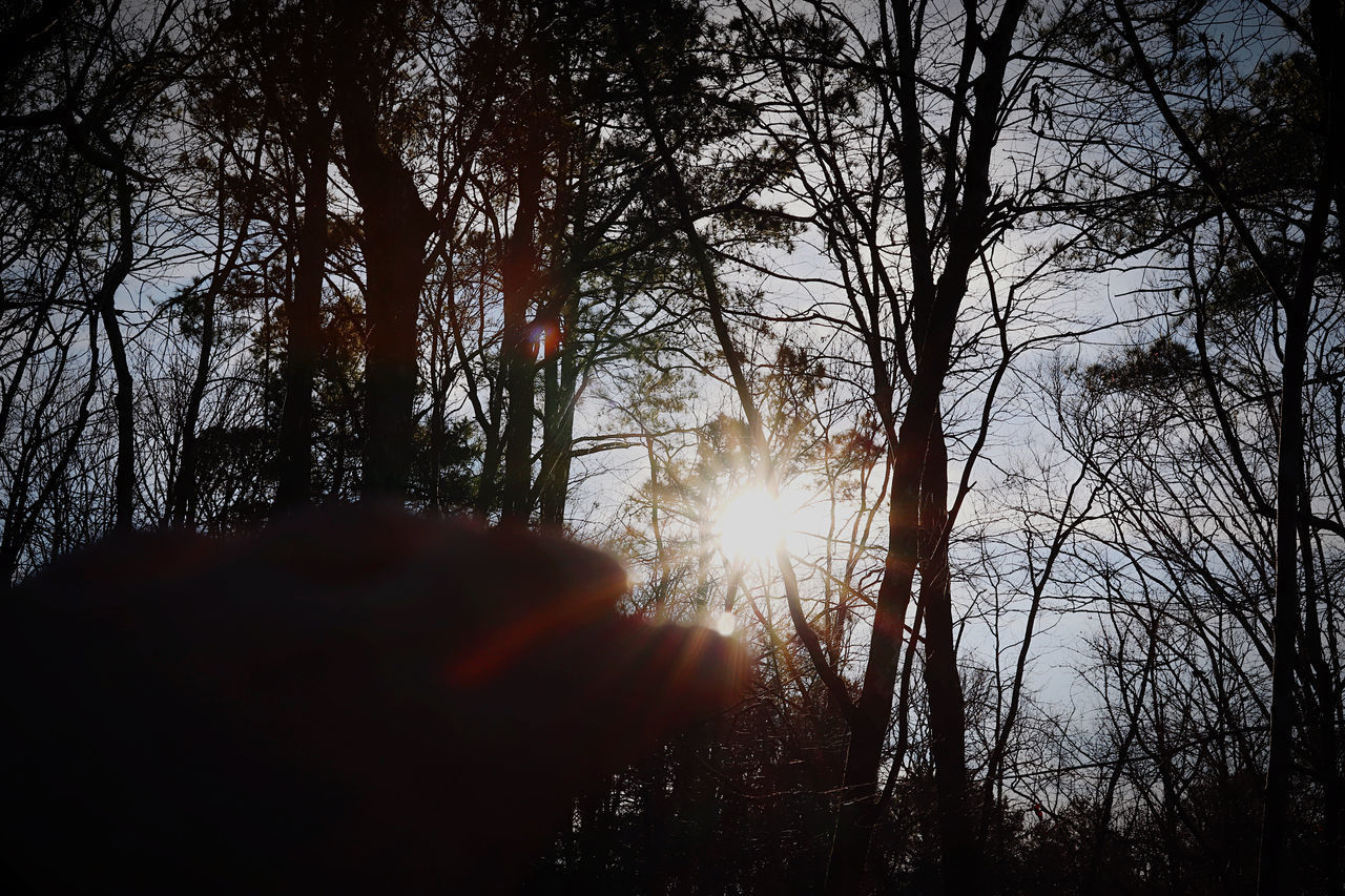 SUNLIGHT STREAMING THROUGH SILHOUETTE TREE