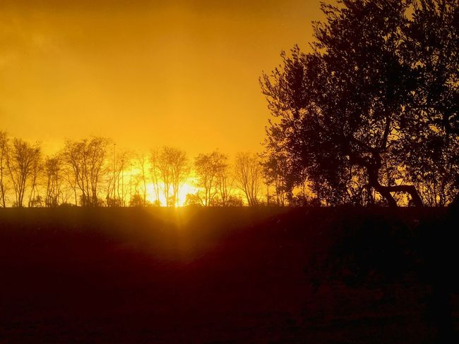 Beauty In Nature Close-up Day Growth Nature No People Outdoors Silhouette Sky Sunset Tree