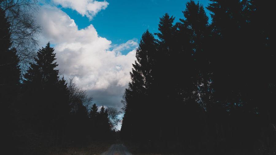 Tree Plant Sky Beauty In Nature Cloud - Sky Tranquility Forest Tranquil Scene No People Nature Growth Scenics - Nature Land Silhouette Non-urban Scene Day Outdoors Idyllic Environment Landscape Coniferous Tree EyeEm Best Shots EyeEm Selects EyeEm Gallery The Great Outdoors - 2019 EyeEm Awards