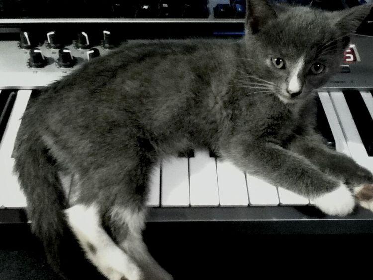 Music Studio  Cats