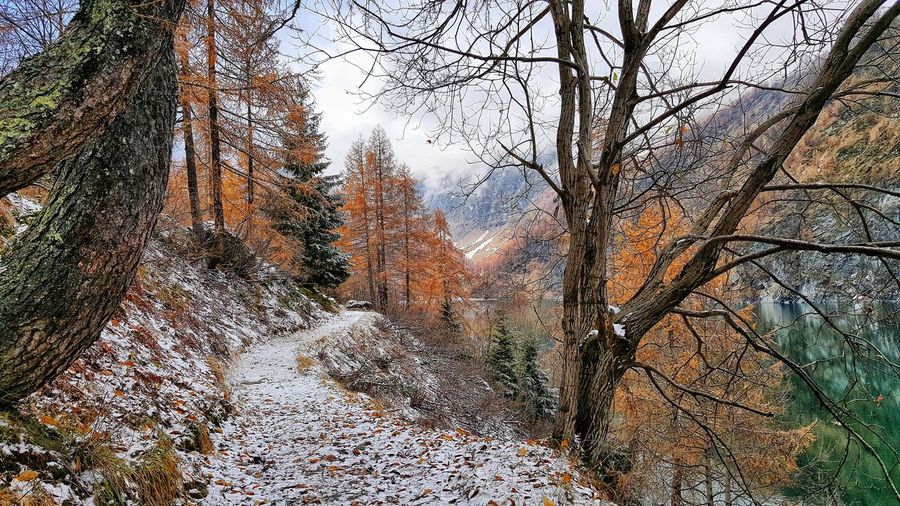 EyeEm Nature Lover EyeEm Best Shots Eye4photography  Winter Nature_collection Nature Photography Autumn🍁🍁🍁 Autumnwinter TheEyeEmWorldTour Backgrounds Full Frame Tree Sky Close-up Snow Covered Snow Snowcapped Snowcapped Mountain Weather Condition Covering Frozen