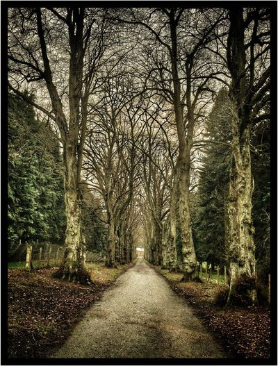 Treelined Path in Camperdown Park in Dundee Trees Country Road Pathway Nature Nature_collection Nature Photography Natural Beauty End Of The Road Archway Natural Arch Eyemphotography EyeEm Gallery EyeEm Nature Lover Eyeemphotography Eye4photography  EyeEm Showcase April