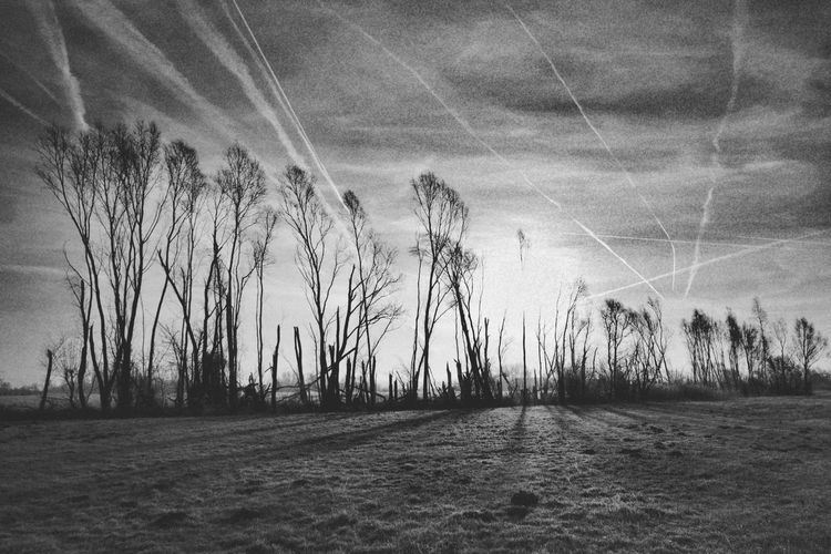 frozen world Blackandwhite Frozen Nature Beauty In Nature Nature Photography Nature_collection My Point Of View Cold Temperature Cold Condition Cold Weather Frosty Hergershäuser Wiesen Sunrise Tree Field Sky Grass Agricultural Field Countryside Grassland