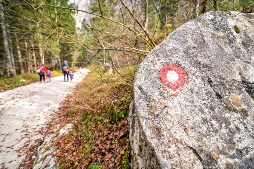 Adventure Challenge Day Exercising Exploration Family Forest Forest Photography Forestwalk Hiking Hiking Hikingadventures Leisure Activity Marker Nature Outdoors People Planica Real People Road Markings Rock - Object Rock Climbing Slovenia Sport Tamar