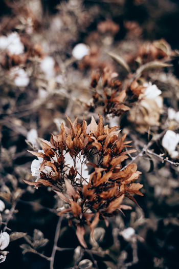 Plant Growth Close-up Beauty In Nature Nature Selective Focus Field Dry Flower Fragility Flowering Plant Outdoors Tranquility Sunlight Wilted Plant Dead Plant Flower Head Dried Brown Color Backgrounds Bush Copy Space Portrait Orientation Fall Season Monochrome