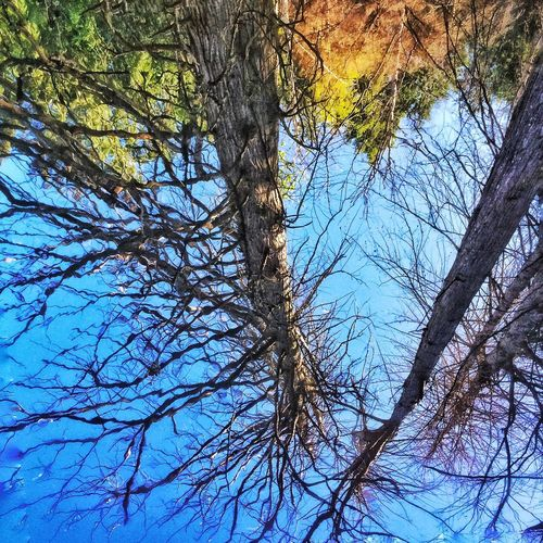 The Great Outdoors - 2016 EyeEm Awards Reflected Glory Marshland  Sky And Trees Looking Down Trees And Water Water Reflections Water Surface Water