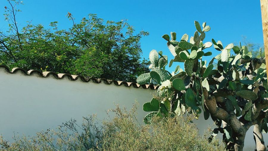 Architecture_collection Adobe Wall Trees Beautiful Cactus Clay Tile Roof Nature_collection California Early Life Old Town San Diego