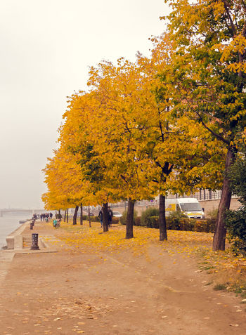 On the Danube promenade Autumn Beauty In Nature Change Clear Sky Day Leaf Nature No People Outdoors Sky Tranquility Tree