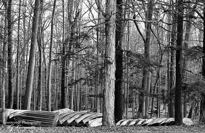 Swartswoodlake Swartswoodstatepark Boats Canoe Blackandwhite Trees Winter Newtonnj Kayak
