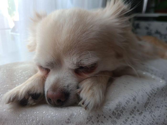 Close-up of a dog sleeping at home