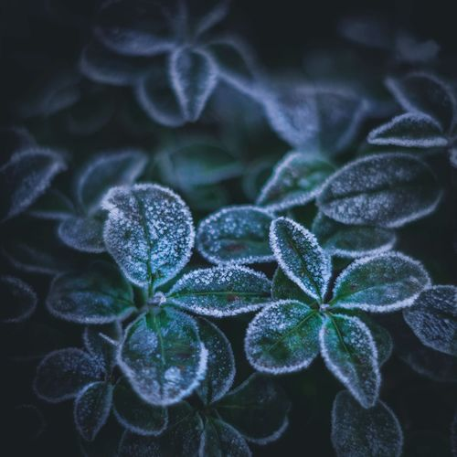 ... frost....