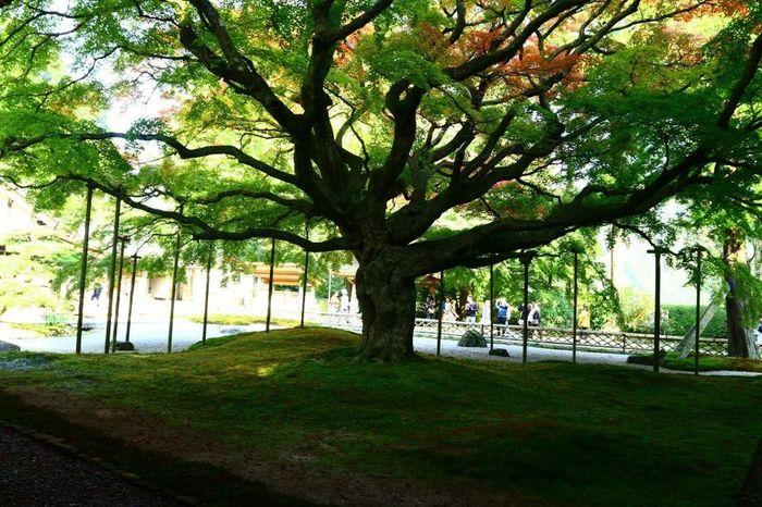Autumn Japan Old Nature