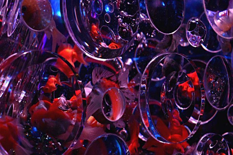 ●●●●● 金魚 アートアクアリウム 金魚 アクアリウム Indoors  Multi Colored Glass - Material Fish Marine Group Of Animals Water