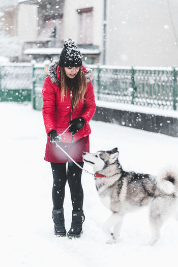 Husky Snow Winter Cold Temperature Pets Real People Domestic Animals Mammal One Person Domestic Clothing Warm Clothing One Animal Lifestyles Canine Dog Women Snowing Outdoors Extreme Weather