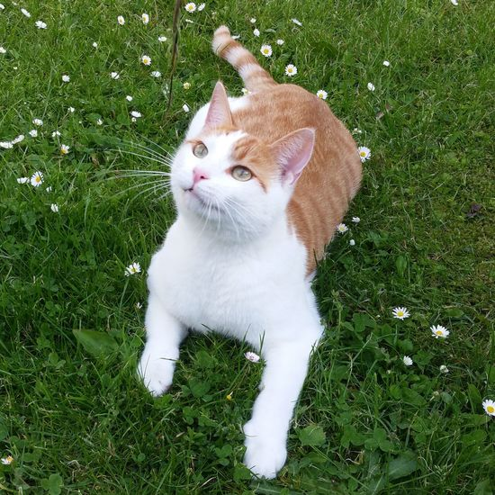 Pets Grass One Animal Domestic Animals Animal Themes Green Color Outdoors Live For The Story Summer Inmygarden Cats Mycat Cute Pets Cats Of EyeEm Summertime Feline Catsofinstagram KAWAII Domestic Cat Enjoying Life Catstagram No People Nature Eyem Nature Lovers  Catlife
