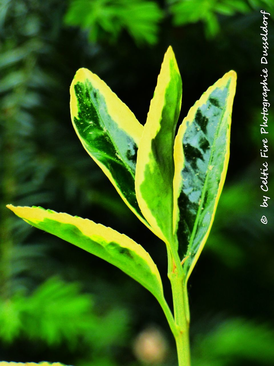 growth, green color, plant, nature, no people, leaf, close-up, day, outdoors, fragility, beauty in nature, freshness