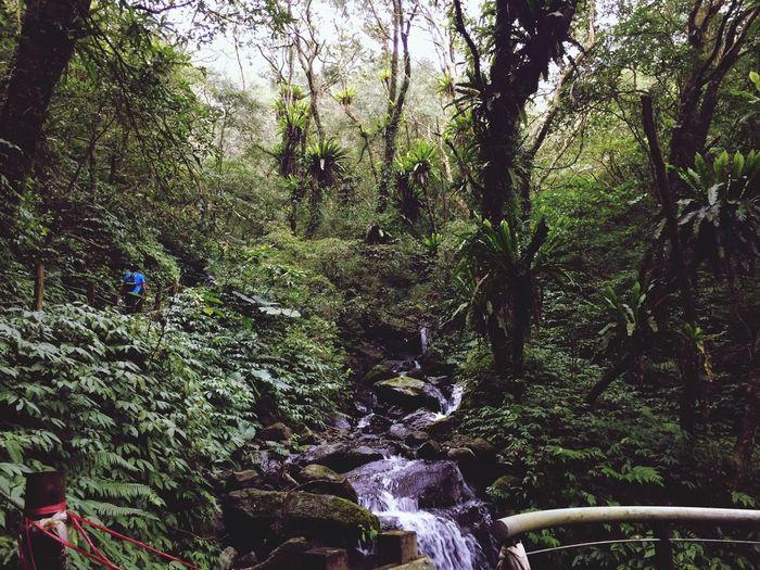 Taiwan Shenmu Forest Beauty In Nature Tree Adventure First Eyeem Photo EyeEmNewHere EyeEmNewHere EyeEmNewHere