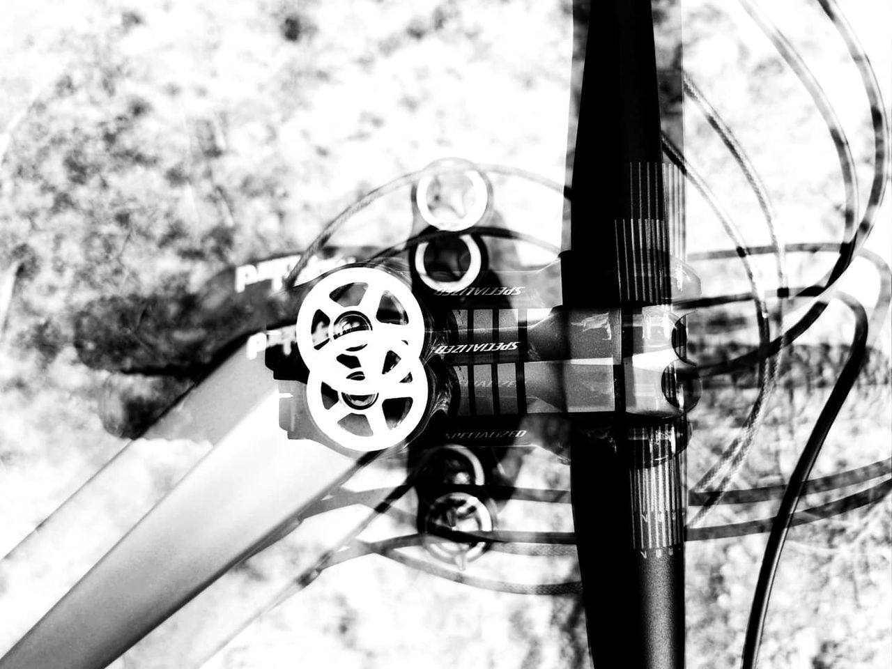 black and white, monochrome photography, monochrome, no people, day, nature, focus on foreground, white, black, bicycle, close-up, outdoors, metal, tree, plant, vehicle