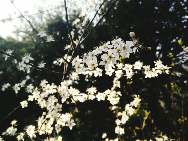 Blossoms  Springtime Frühlingserwachen