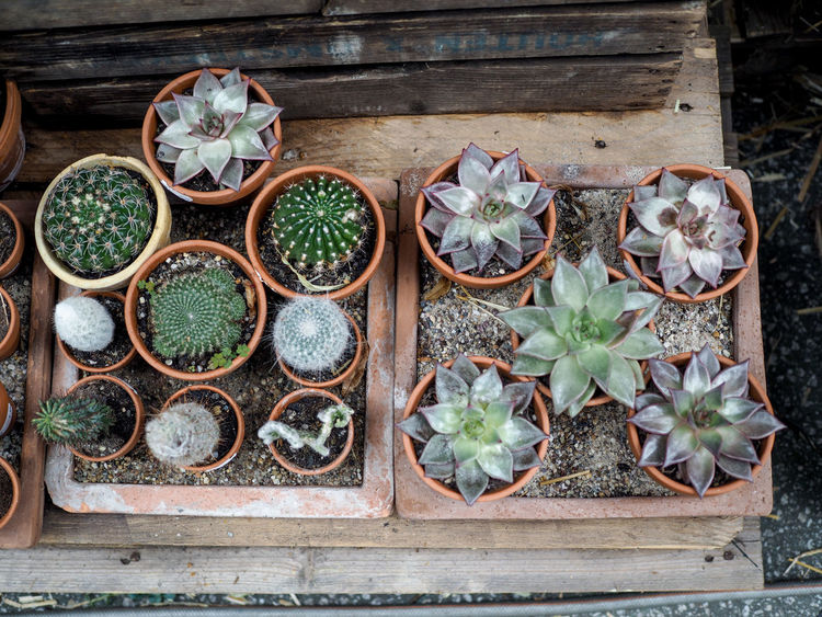 Beauty In Nature Botany Cactus Day Flower Flower Pot Fragility Freshness Green Color Growing Growth High Angle View In Bloom Nature Needle - Plant Part Outdoors Pebble Plant Pot Plant Potted Plant Selective Focus Springtime Succulent Plant Thorn Wildflower