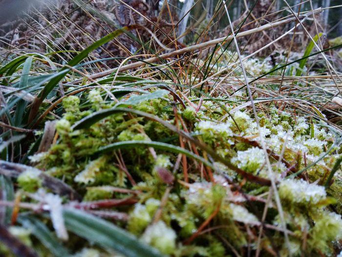 close up of frozen forest floor Moss Moss And Grass Frozen Nature Austrian Alps Austria Woods Forest Photography Tyrol-Austria Snow Cold Temperature Winter Tree Branch Forest Close-up Grass