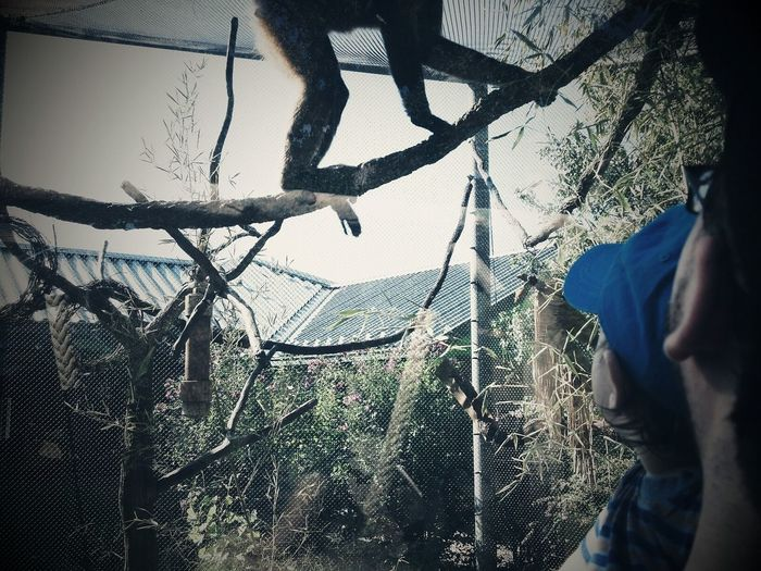 My Son and Grandson watching a Monkey at the Oklahoma City Zoo