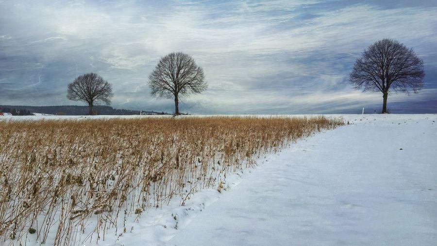 IPS2016Winter Nature_collection IPhone EyeEm Nature Lover EyeEm Best Shots - Nature Iphonephotography Landscape_Collection TreePorn Naturelovers The Week Of Eyeem Showcase: January Oberpfalz Winter