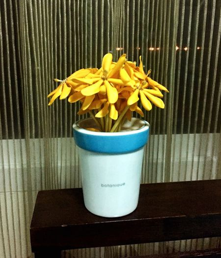My flower 🌼🌼