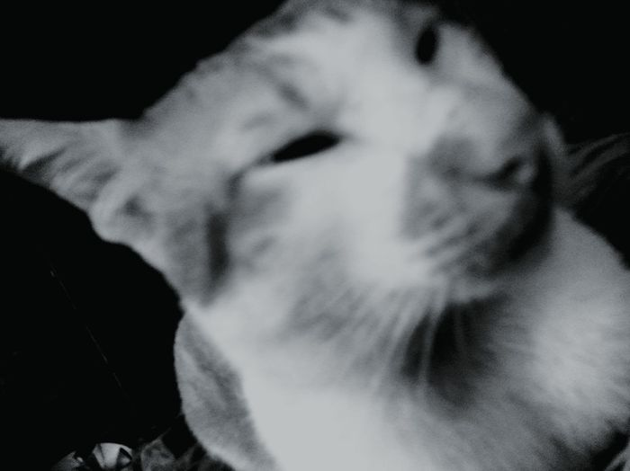 my fave cat First Eyeem Photo