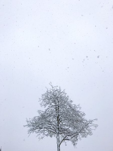 Tree Bare Tree Nature Branch No People Low Angle View Growth Sky Beauty In Nature Outdoors Snowing Day Single Tree cold weather Cold Temperature Lone Landscape Winter Tree Snow Minimal Seattle, Washington