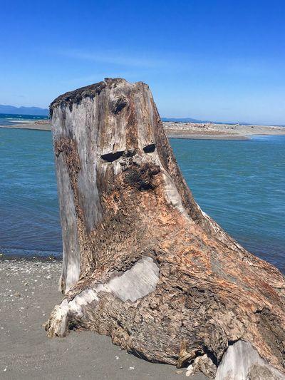 Stump Art Stump Water Sea Sky Beach Land Nature Beauty In Nature