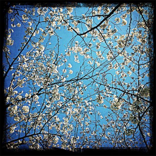 Flowers Blue Sky Flowers In The Sky