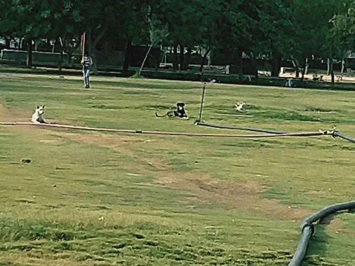 Summer Exploratorium Golf Course Golfer Golf Club Green - Golf Course Sportsman Tree Golf Sport Playing Men EyeEmNewHere Visual Creativity