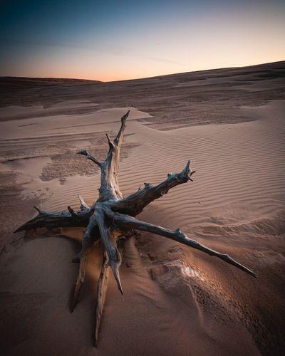 Driftwood on sand at desert against sky