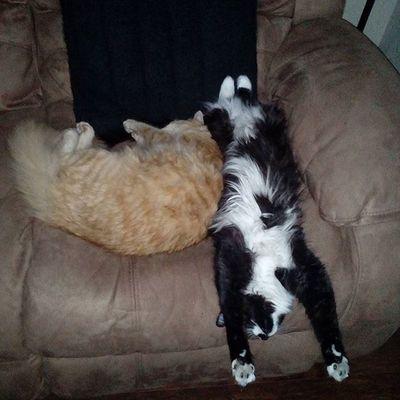 Sleepyoga Mrlito Missphoebe Gingercat Tuxedocat Myfavoritephoto