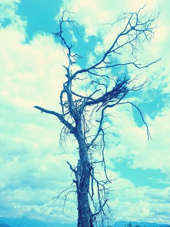 death Tree Cloud - Sky Water Branch Pastel Colored No People Beauty In Nature