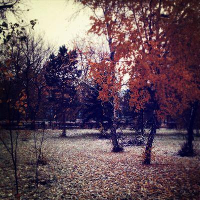 осень Relaxing Omsk Autumn