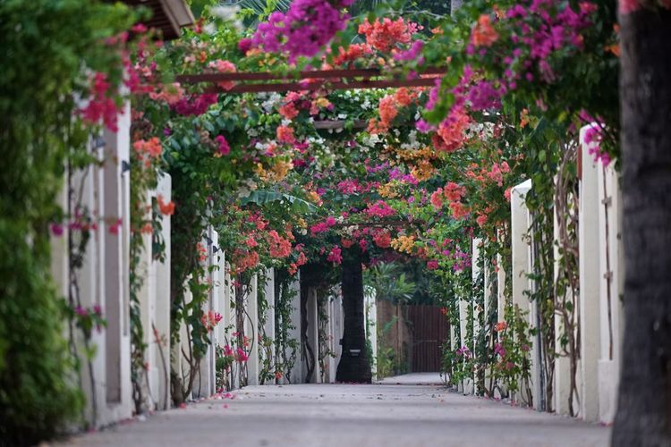 Travel Traveling Arch Architecture Beauty In Nature Building Building Exterior Built Structure Day Direction Flower Flowering Plant Footpath Freshness Gili Trawangan Growth Lombok Nature Outdoors Pink Color Plant Plant Part Selective Focus The Way Forward Tourism