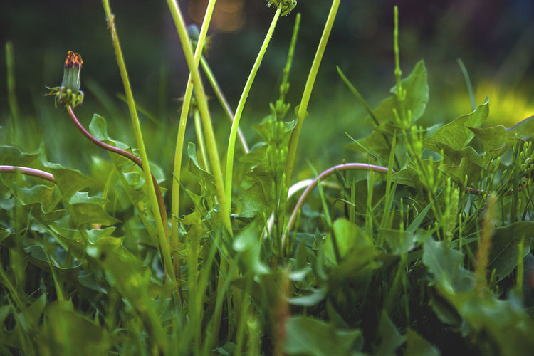 Growth Green Color Plant Beauty In Nature Selective Focus Nature Close-up Field Day Land Plant Part Leaf No People Grass Tranquility Outdoors Fragility Vulnerability  Freshness Blade Of Grass