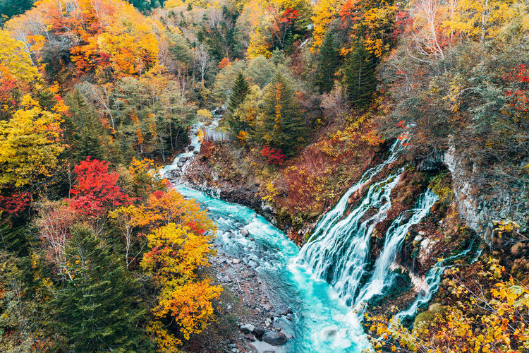 Daisetsuzan Autumn Beauty In Nature Change Tree Plant Scenics - Nature Nature Multi Colored No People Water Day Forest Land Orange Color Environment Plant Part Non-urban Scene Yellow Leaf Outdoors Flowing Water Flowing Autumn Collection Running Water