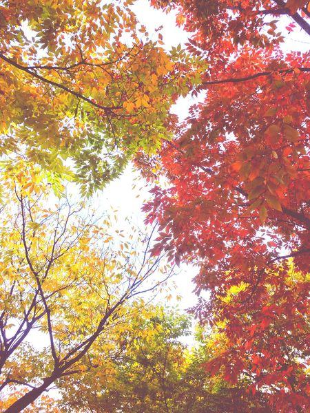 EyeEm Best Shots Enjoying Life Autumn Nature EyeEm Best Shots - Nature EyeEm Nature Lover Leaves Autumn Leaves Dailyphoto Taking A Break
