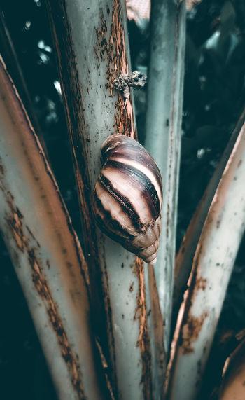 High angle view of shell on rusty metal
