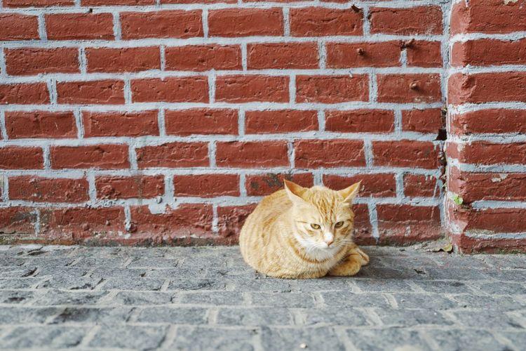 猫 Cat Domestic Cat Feline Pets Animal Themes Domestic Animals One Animal Mammal