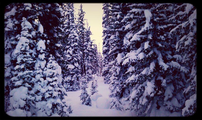 Trees Snow Colorado