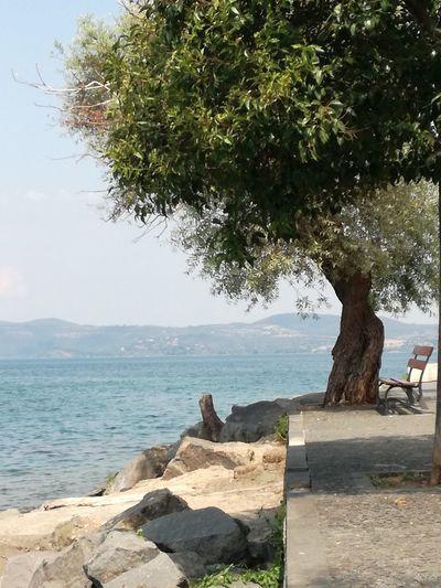 Tree on rocks by sea against sky
