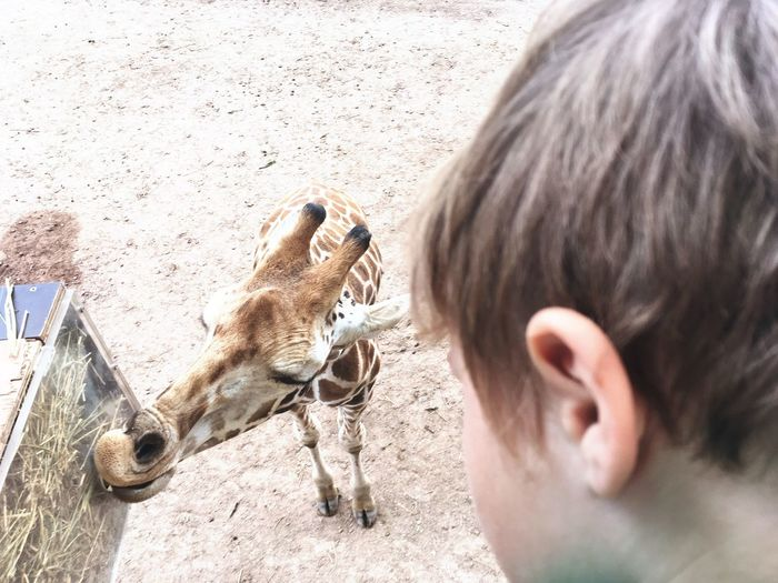 Zoo Zoo Animals  Giraffe ♡ Child Outdoors Baby Boy Day Out With Family Feeding Time One Animal First Eyeem Photo