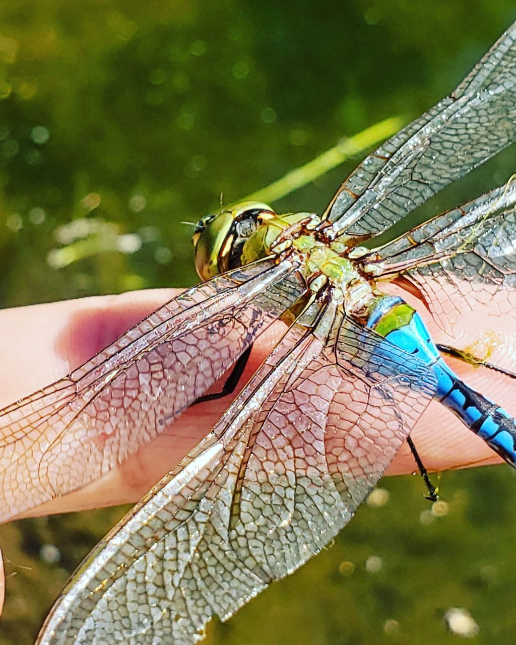 animal wildlife, animal, animal themes, one animal, animals in the wild, invertebrate, human body part, focus on foreground, insect, close-up, human hand, day, hand, nature, body part, dragonfly, outdoors, animal wing, human finger, finger, animal eye