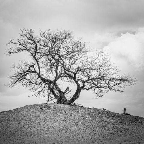 Bare tree against sky