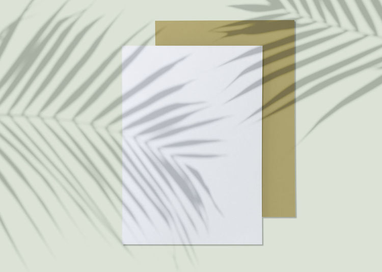 Paper Indoors  No People White Color Pattern Shadow Still Life Close-up Striped Office Creativity Wall - Building Feature High Angle View Art And Craft Day Communication Table White Background Office Supply Absence Blank Shadows & Lights Tree Leaves