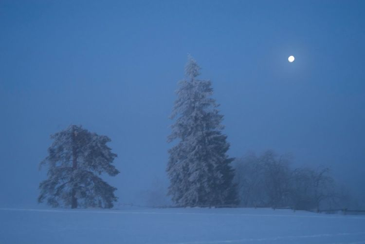 Trees on snow covered field against sky at night